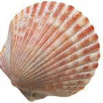 shell1