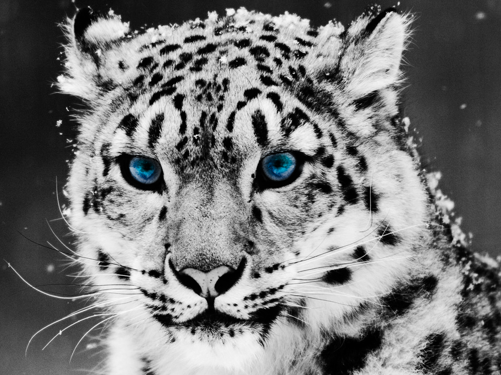 12 Snow Leopard Shortcuts You Should Know Xappsoftware Blog